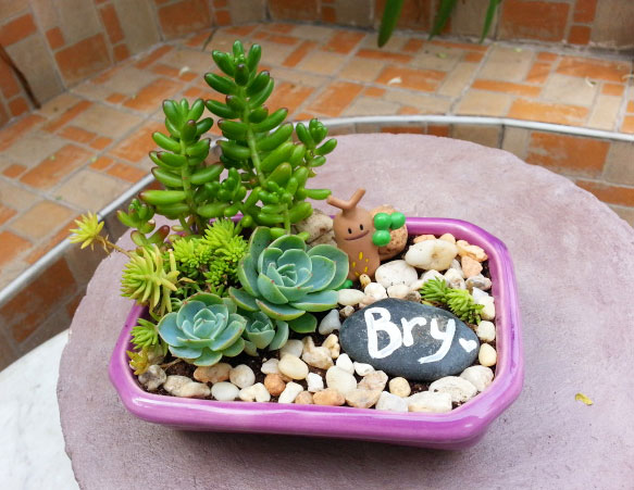 Adding a small painted stone makes a dish garden more personalized.